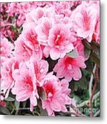 Pink Azalea In Bloom Metal Print by Halyna  Yarova