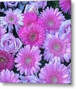 Pink Background Daisy And Roses Metal Print