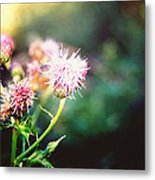 Pink Beauty Metal Print