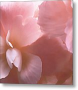 Pink Begonia Floral Metal Print