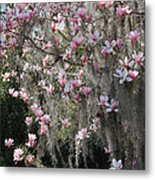 Pink Blossoms And Gray Moss Metal Print