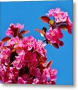 Pink Blossoms Blue Sky 031015a Metal Print