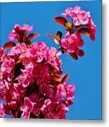 Pink Blossoms Blue Sky 031015aa Metal Print