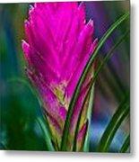 Pink Bromelaid Flower Metal Print