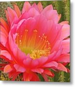Pink Cactus Flower Of The Southwest Metal Print