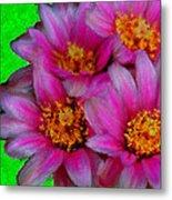 Pink Cactus Flowers Metal Print