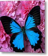 Pink Camilla And Blue Butterfly Metal Print
