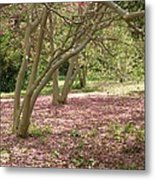 Pink Carpet In The Forrest Metal Print