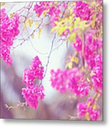 Pink Cascade Of Bougainvillea Metal Print
