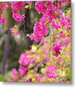 Pink Cascade Of Bougainvillea. Vertical Metal Print