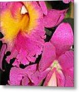Pink Cattleya Orchid Metal Print