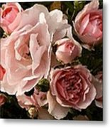 Pink Champagne  Metal Print by Cole Black