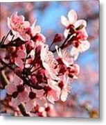 Pink Cherry Heaven  Metal Print