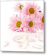 Pink Chrysanthemums Beautiful Metal Print by Boon Mee