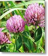Pink Clover Wildflower - Trifolium Pratense Metal Print