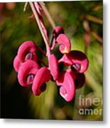 Pink Curls - Flower Macro Metal Print