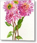 Pink Dahlias Metal Print by Sharon Freeman
