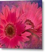 Pink Daisies Abstract Metal Print