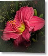Pink Day Lily Metal Print