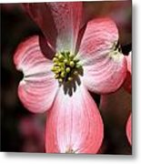 The Cross Of Christ Pink Dogwood At Easter 7 Metal Print