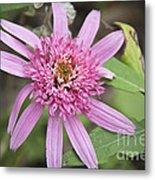 Pink Double Delight Echinacea Metal Print