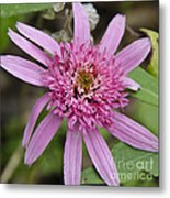 Pink Double Delight Squared Metal Print