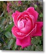 Pink Double Rose Metal Print
