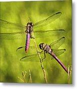 Pink Dragonflies Metal Print