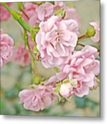 Pink Fairy Roses Metal Print