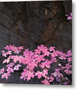 Pink Fall Colors In Sedona Arizona Metal Print by Dave Dilli