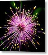 Pink Fireworks  Metal Print