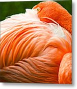 Pink Flamingo Metal Print by Viacheslav Savitskiy