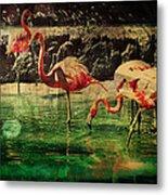 Pink Flamingos - Shangri-la Metal Print