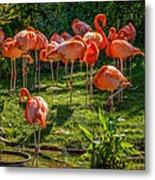 Pink Flamingos Metal Print