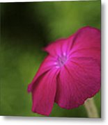Pink - Floral Art Print Metal Print