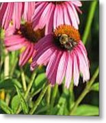 Pink Flower And Bee Metal Print