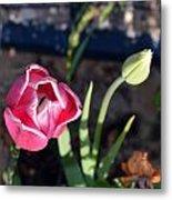 Pink Flower And Bud Metal Print