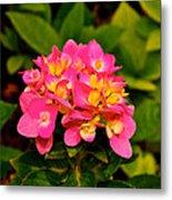 Pink Flower Austin Metal Print