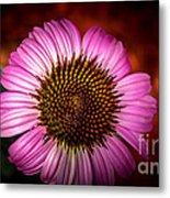 Pink Flower Blooming Metal Print