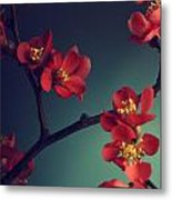 Pink Flower Metal Print by Jelena Jovanovic