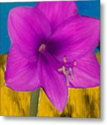 Pink Flower On A Fall Evening Metal Print