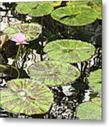 One Pink Water Lily With Lily Pads Metal Print