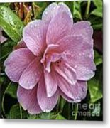 Pink Flower With Rain Drops Metal Print
