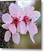 Pink Flowering Tree Floral Metal Print