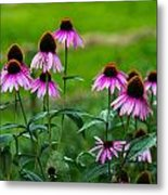 Pink Flowers In Maine Metal Print by Jason Brow