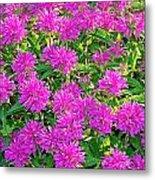 Pink Garden Flowers Metal Print