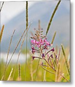 Pink Gem - Fire Weed Wildflower In Grand Teton National Park - Wyoming Metal Print