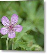Pink Geranium In Bloom In Yellowstone Metal Print
