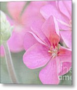 Pink Geraniums Metal Print