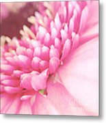 Pink Gerber Daisy Metal Print